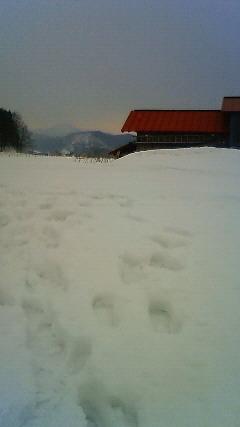 追いかけて雪国