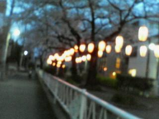 桜に赤提灯
